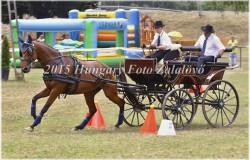 Fogathajtó verseny, 2015 (5/29)