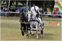 Fogathajtó verseny, 2015 (7/29)