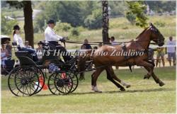 Fogathajtó verseny, 2015 (19/29)