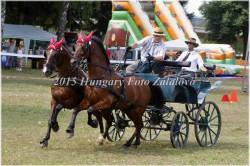 Fogathajtó verseny, 2015 (25/29)